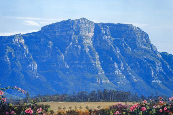 ac0038-constantia-valley-rosesBE1F1088-4D62-3315-F2EE-F1AEBF911603.jpg
